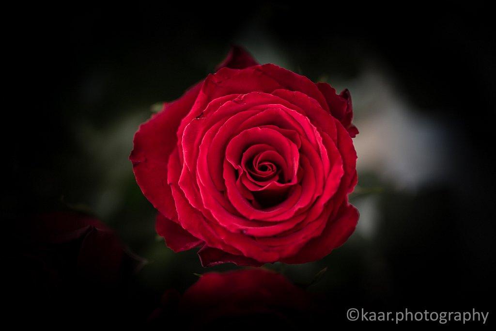 Valentine's '15